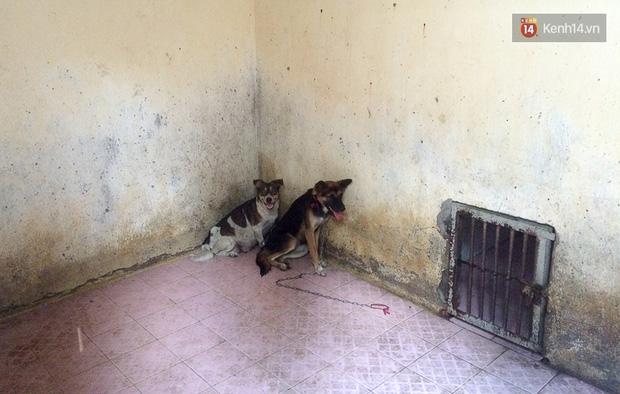 Chó cưng bị Đội săn bắt tóm, cụ bà hớt hải: Nó đi chợ với tôi, đang nằm trên vỉa hè chờ tôi về cùng thì bị bắt - Ảnh 16.