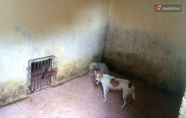 Chó cưng bị Đội săn bắt tóm, cụ bà hớt hải: Nó đi chợ với tôi, đang nằm trên vỉa hè chờ tôi về cùng thì bị bắt - Ảnh 17.