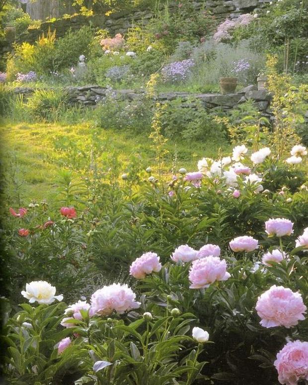 Khu vườn ngập tràn hoa tươi của bà Tasha.