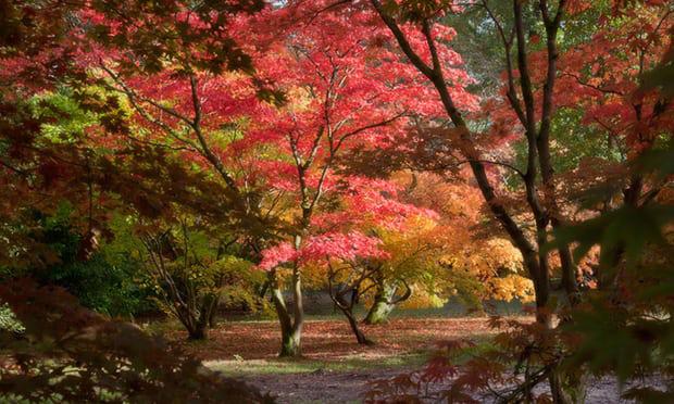 4. Westonbirt Arboretum, Gloucestershire: Thiên đường mùa thu ở nước Anh này mùa nào cũng hấp dẫn, nhưng vào cuối tháng 10, khi toàn bộ cây rừng chuyển dần sang màu vàng, đỏ, nơi đây càng trở nên tuyệt diệu. Dịp này, các khách sạn ở đây tăng giá gần gấp đôi.
