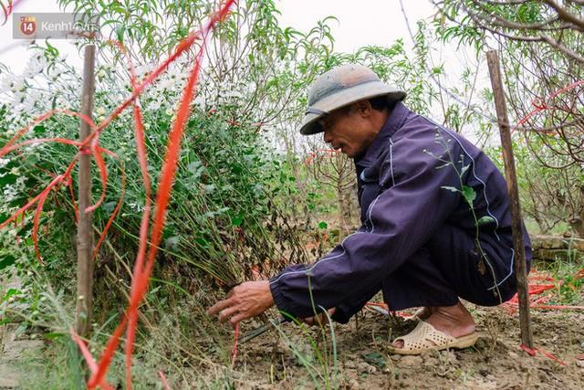 Đằng sau những gánh cúc họa mi trên phố Hà Nội là nỗi niềm của người nông dân Nhật Tân: Không còn sức nữa, phải bỏ hoa về nhà!  - Ảnh 4.