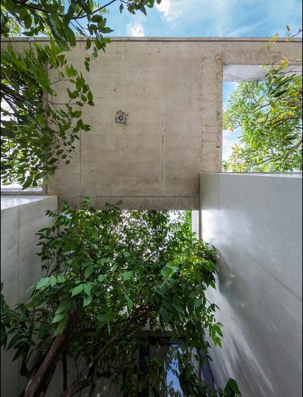 Báo Mỹ ngỡ ngàng với ngôi nhà tràn ngập cây xanh tuyệt đẹp giữa lòng Sài Gòn - ảnh 6