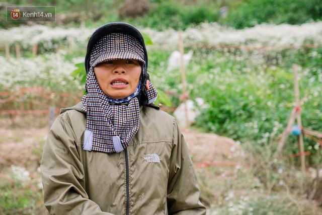 Đằng sau những gánh cúc họa mi trên phố Hà Nội là nỗi niềm của người nông dân Nhật Tân: Không còn sức nữa, phải bỏ hoa về nhà!  - Ảnh 5.