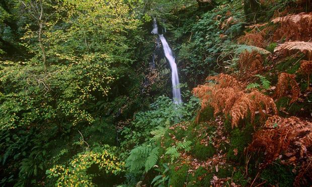 6. Rừng nhiệt đới Dolcoch, bắc xứ Wales: Công viên quốc gia Snowdonia là nơi có thể ngắm nhìn bức tranh thiên nhiên hoang dã và ấn tượng. Tuyến đường sắt Talyllly kéo dài 7 dặm, chạy dọc bãi biển Tywyn tới thung lũng Fathew, dẫn đến thác nước hùng vĩ Dolgoch và Nant Gwernol. Dọc theo con đường mòn trong rừng, du khách sẽ đến thung lung rừng nhiệt đới, bao quanh bởi những cây cổ thụ.