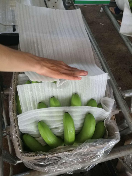 Hoàng Anh Gia Lai bắt đầu thu hoạch chuối, chuẩn bị phân phối qua hệ thống Bách Hóa Xanh - Ảnh 7.