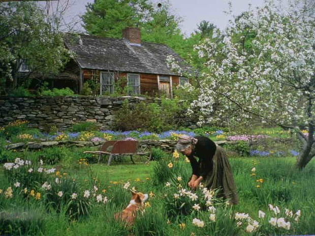 Chăm sóc khu vườn là thú vui hàng ngày của bà Tasha lúc còn sinh thời.