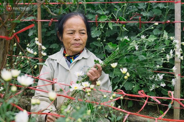 Đằng sau những gánh cúc họa mi trên phố Hà Nội là nỗi niềm của người nông dân Nhật Tân: Không còn sức nữa, phải bỏ hoa về nhà!  - Ảnh 7.