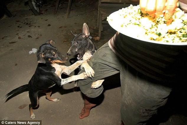 Hình ảnh rùng rợn trong những trang trại thịt chó: Nỗi đau của những chú chó phải chứng kiến cái chết của đồng loại - Ảnh 7.