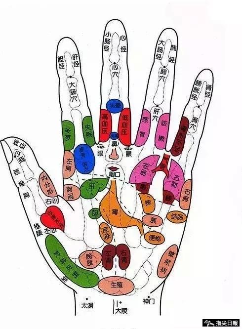 Đông y quan niệm, bàn tay là cửa ngõ của các cơ quan nội tạng