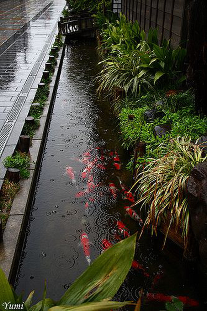 Với hệ thống thoát nước lớn, quy mô bậc nhất thế giới nhưng sao người Nhật lại xây nhiều rãnh nhỏ trước cửa vậy nhỉ?