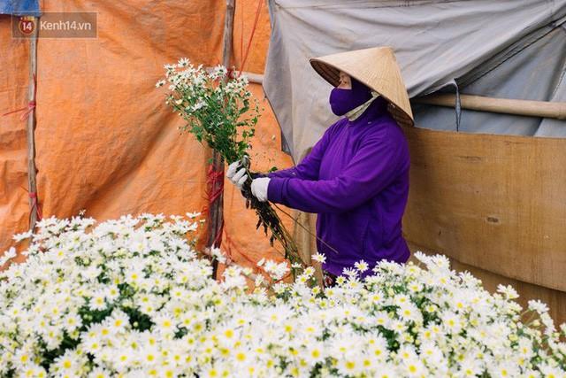 Đằng sau những gánh cúc họa mi trên phố Hà Nội là nỗi niềm của người nông dân Nhật Tân: Không còn sức nữa, phải bỏ hoa về nhà!  - Ảnh 8.