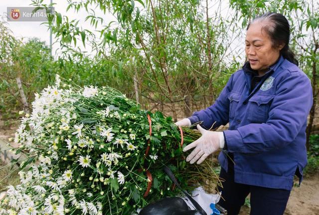 Đằng sau những gánh cúc họa mi trên phố Hà Nội là nỗi niềm của người nông dân Nhật Tân: Không còn sức nữa, phải bỏ hoa về nhà!  - Ảnh 9.
