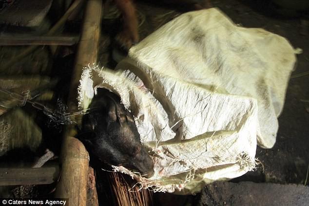 Hình ảnh rùng rợn trong những trang trại thịt chó: Nỗi đau của những chú chó phải chứng kiến cái chết của đồng loại - Ảnh 9.