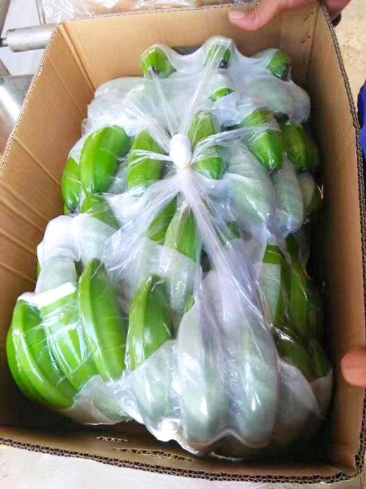 Hoàng Anh Gia Lai bắt đầu thu hoạch chuối, chuẩn bị phân phối qua hệ thống Bách Hóa Xanh - Ảnh 10.