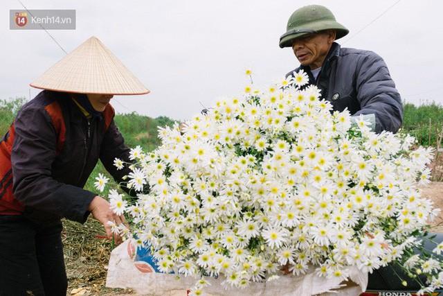 Đằng sau những gánh cúc họa mi trên phố Hà Nội là nỗi niềm của người nông dân Nhật Tân: Không còn sức nữa, phải bỏ hoa về nhà!  - Ảnh 10.