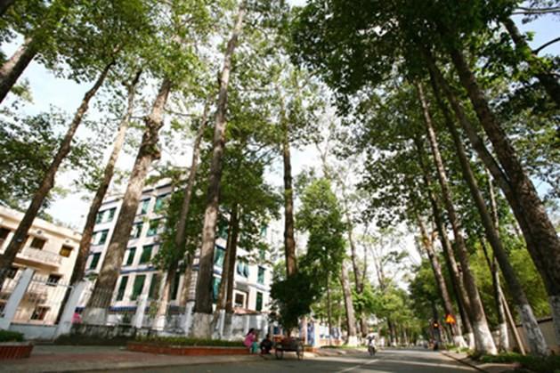 Truyền dịch cứu 1.000 cây cổ thụ: Không sử dụng túi truyền dịch của Trung Quốc - Ảnh 1.