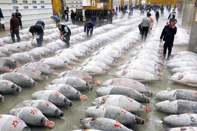 Kỷ nguyên mới cho chợ cá lâu đời nhất Nhật Bản, nơi xử lý 1.600 tấn hải sản mỗi ngày - Ảnh 2.