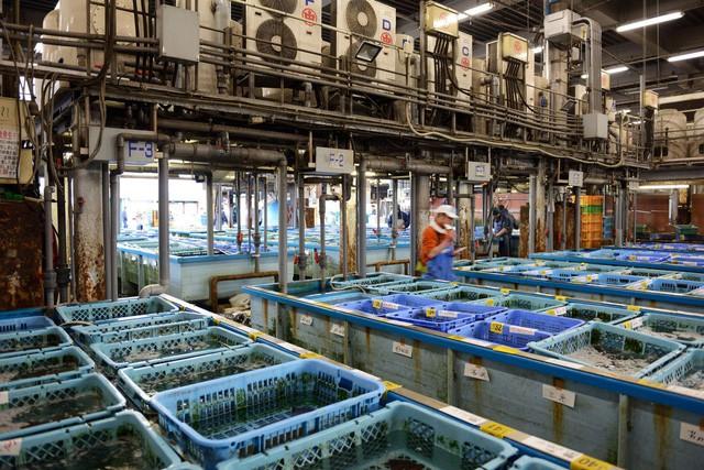 Kỷ nguyên mới cho chợ cá lâu đời nhất Nhật Bản, nơi xử lý 1.600 tấn hải sản mỗi ngày - Ảnh 7.
