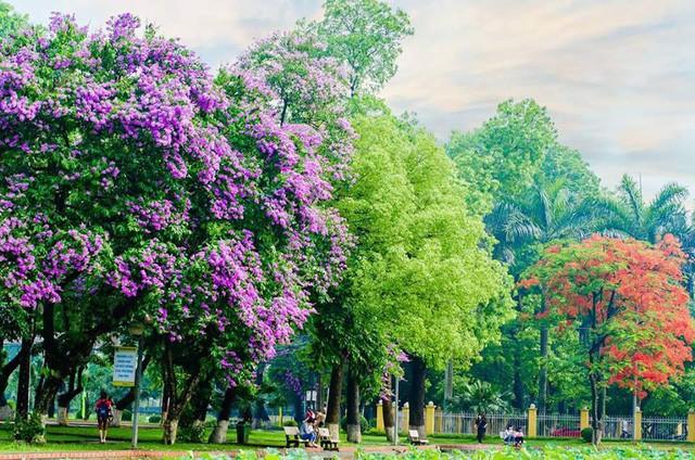 Ngay tại Hà Nội có một ngôi trường rộng gần 200ha, cây cối, hoa trái phủ xanh khắp nơi như rừng nhiệt đới - Ảnh 4.