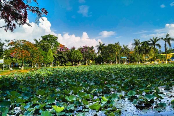 Ngay tại Hà Nội có một ngôi trường rộng gần 200ha, cây cối, hoa trái phủ xanh khắp nơi như rừng nhiệt đới - Ảnh 5.