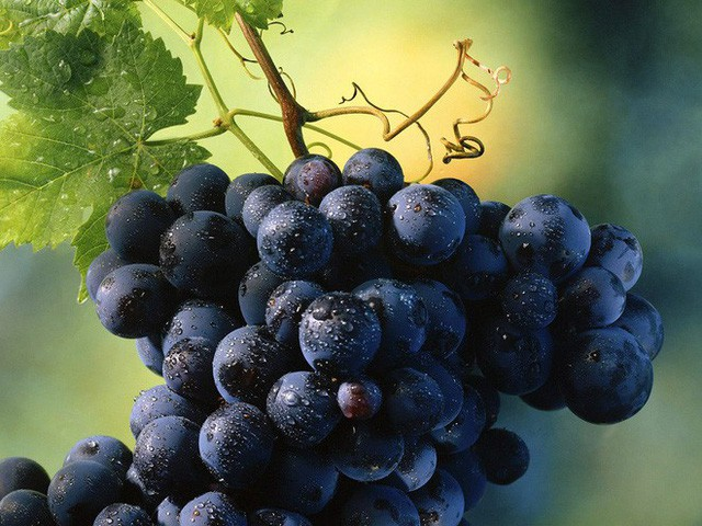 Muốn thải độc, ngăn chặn lão hóa, tránh bệnh tật: Ăn 9 loại quả này sẽ tốt hơn uống thuốc - Ảnh 7.
