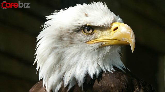 Phải sống như Đại Bàng: Luôn tránh xa những con chim sẻ và quạ, cũng như bạn phải tránh xa những người cản trở sự nghiệp của mình. Nên nhớ, Đại Bàng chỉ bay với những con Đại Bàng khác - Ảnh 2.