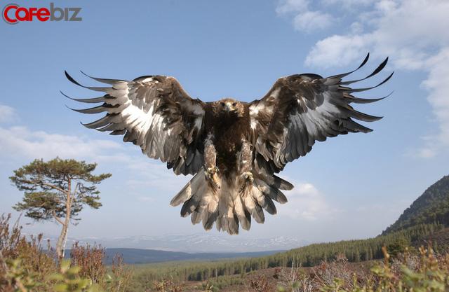 Phải sống như Đại Bàng: Luôn tránh xa những con chim sẻ và quạ, cũng như bạn phải tránh xa những người cản trở sự nghiệp của mình. Nên nhớ, Đại Bàng chỉ bay với những con Đại Bàng khác - Ảnh 4.