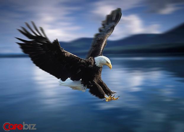 Phải sống như Đại Bàng: Luôn tránh xa những con chim sẻ và quạ, cũng như bạn phải tránh xa những người cản trở sự nghiệp của mình. Nên nhớ, Đại Bàng chỉ bay với những con Đại Bàng khác - Ảnh 3.