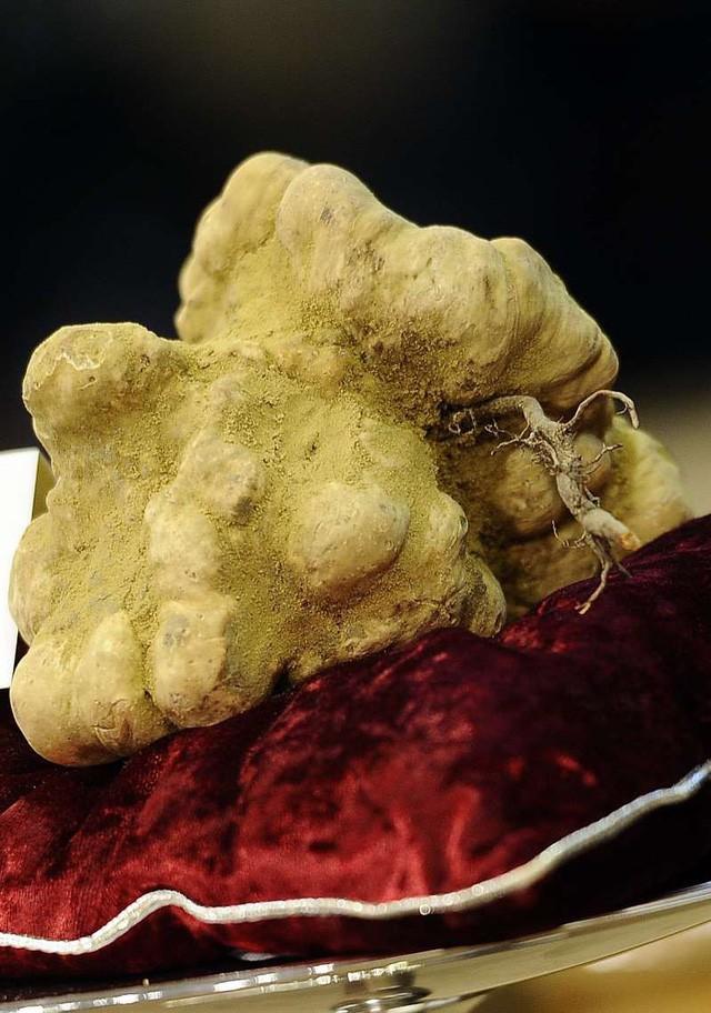 Đại gia bí ẩn chi hơn 2 tỷ đồng mua cục nấm chưa đến 1kg - Ảnh 1.