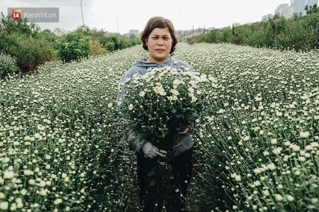 Cúc hoạ mi vào vụ mùa, nông dân Hà Nội hớn hở chào mừng khách đến mua hoa và chụp ảnh - Ảnh 15.