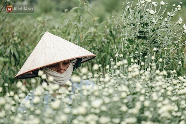 Cúc hoạ mi vào vụ mùa, nông dân Hà Nội hớn hở chào mừng khách đến mua hoa và chụp ảnh - Ảnh 21.