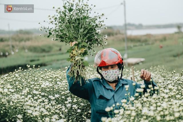 Cúc hoạ mi vào vụ mùa, nông dân Hà Nội hớn hở chào mừng khách đến mua hoa và chụp ảnh - Ảnh 6.