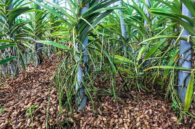 Ngắm vườn lan mokara lãi 2 tỉ đồng/năm của nam thanh niên Đà Nẵng  - Ảnh 3.