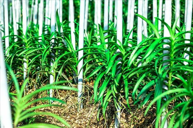Ngắm vườn lan mokara lãi 2 tỉ đồng/năm của nam thanh niên Đà Nẵng  - Ảnh 6.