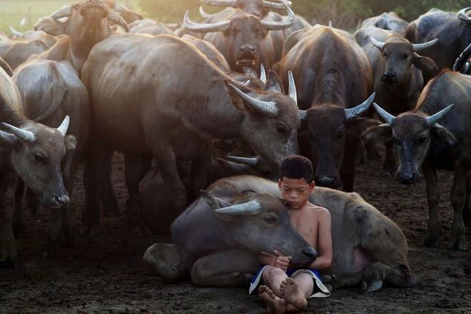 giải thưởng ảnh siena quốc tế - photo 2 1541476113716457537221 - 10+ khoảnh khắc tuyệt đẹp đoạt giải thưởng ảnh Siena quốc tế, 2 trong đó được chụp ở Việt Nam