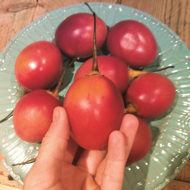 """Ào ạt trồng cà chua lạ """"giá triệu đồng/kg, nông dân """"lĩnh đủ"""" - Ảnh 2."""