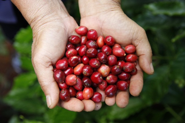Gu uống cà phê phin của người Việt trong nhịp sống hiện đại: đậm đà, nguyên chất và phải sạch - Ảnh 8.
