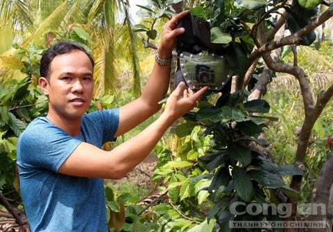 Trái cây độc bán Tết giá bạc triệu mỗi cặp - Ảnh 1.