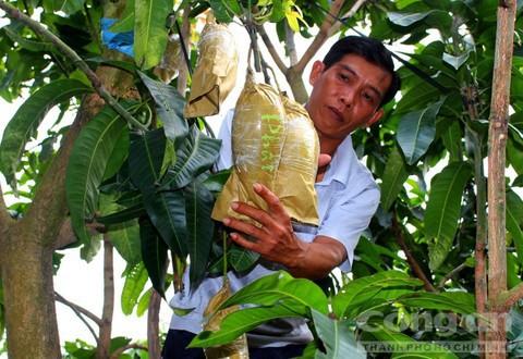 Trái cây độc bán Tết giá bạc triệu mỗi cặp - Ảnh 16.