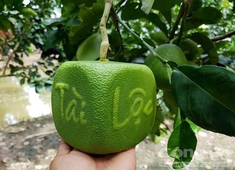 Trái cây độc bán Tết giá bạc triệu mỗi cặp - Ảnh 4.
