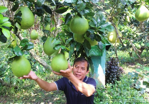 Trái cây độc bán Tết giá bạc triệu mỗi cặp - Ảnh 6.