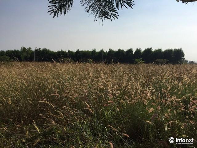 """Đô thị """"ma"""" Nhơn Trạch, Đồng Nai: La liệt dự án bỏ hoang, chung cư không người ở - Ảnh 15."""