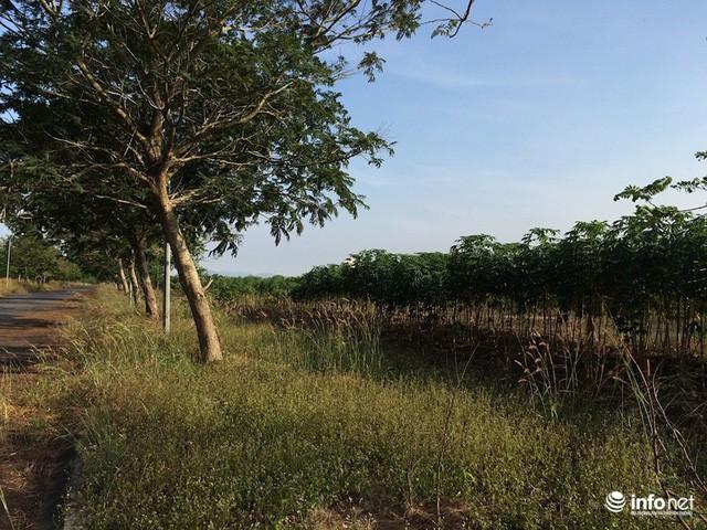 """Đô thị """"ma"""" Nhơn Trạch, Đồng Nai: La liệt dự án bỏ hoang, chung cư không người ở - Ảnh 19."""