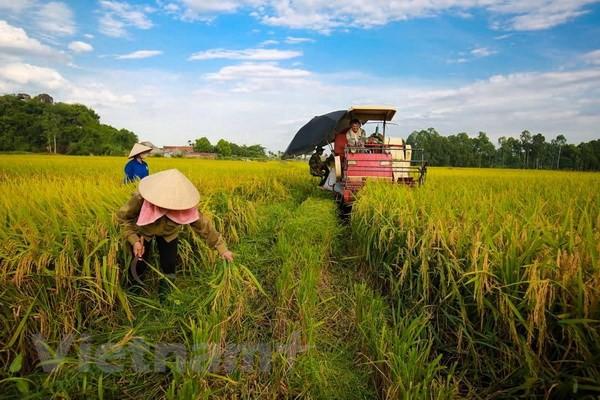 Dấu ấn của tăng trưởng ngành nông nghiệp trong năm 2018 - Ảnh 1.