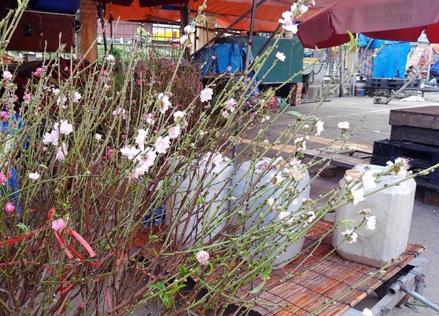Chuyện lạ: Hoa đào bất ngờ bung nở rầm rộ, giá 200.000 đồng/cành - Ảnh 6.