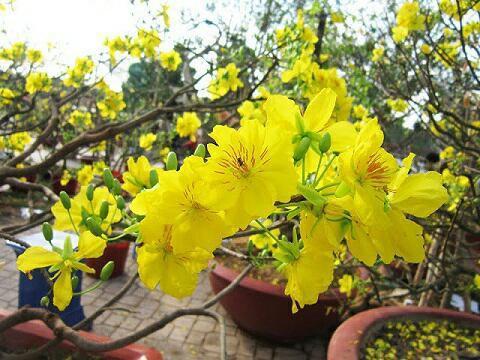 Những loại hoa gia đình nào cũng nên trưng trong ngày Tết để rước thêm may mắn và tài lộc vào nhà - Ảnh 1.