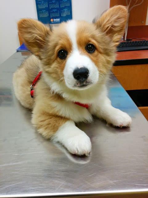 Nhân năm con Chó, đây là những sự thật cool ngầu chẳng ai biết về loài vật dễ thương nhất quả đất này - Ảnh 1.