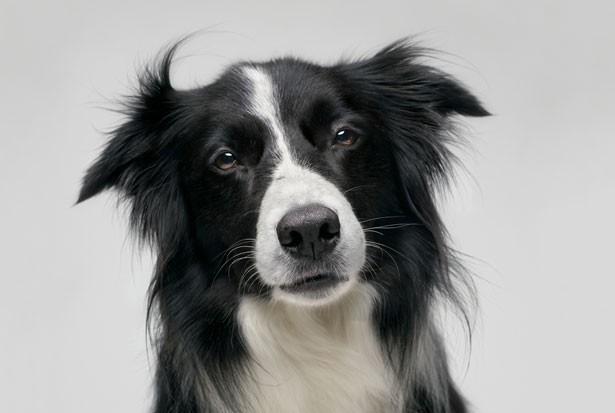 Nhân năm con Chó, đây là những sự thật cool ngầu chẳng ai biết về loài vật dễ thương nhất quả đất này - Ảnh 5.