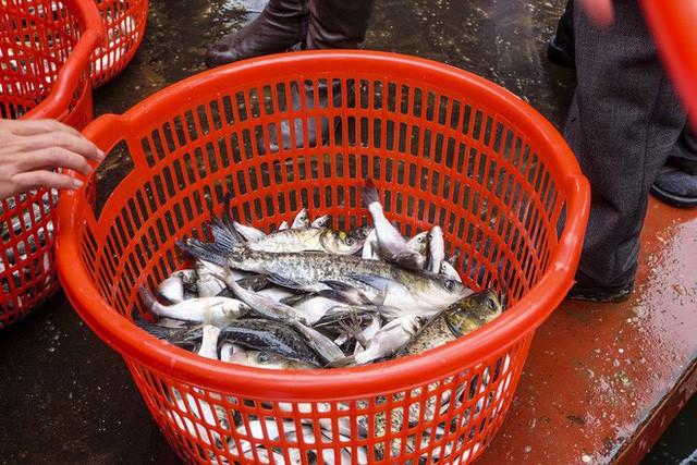 Hàng vạn người chuyền tay nhau phóng sinh gần 5 tấn cá xuống sông Hồng  - Ảnh 4.
