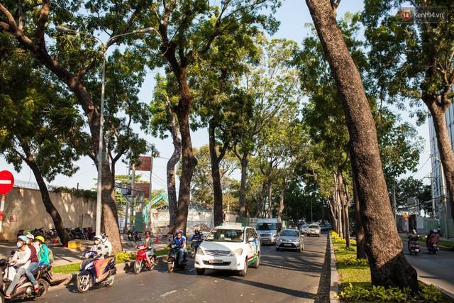Chùm ảnh: Đường Tôn Đức Thắng trước và sau khi hàng trăm cây xanh bị đốn hạ để phát triển thành phố - Ảnh 2.